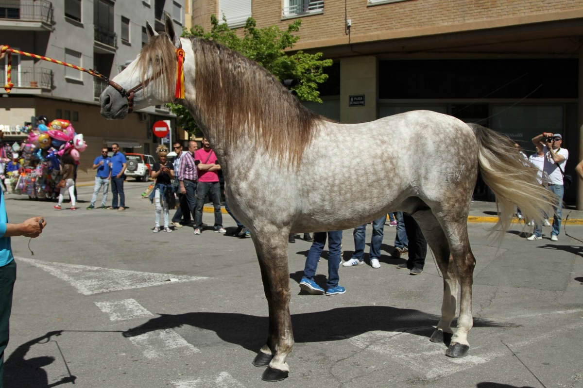 http://caballosdelvino.org/wp-content/uploads/photo-gallery/fotosdia1/2016_Chirinos_1.JPG